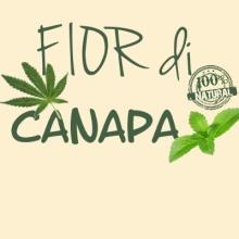 FIOR DI CANAPA - 10